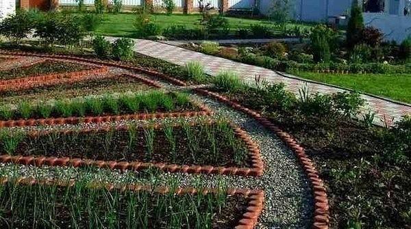 Подбираем растения для красивого огорода